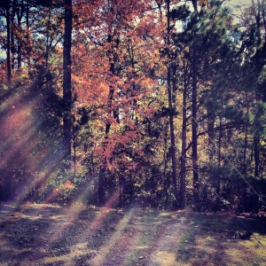 Sunlight in the Pines